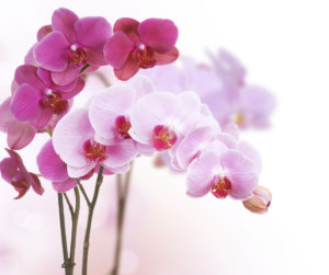 The meaning of popular funeral flowers